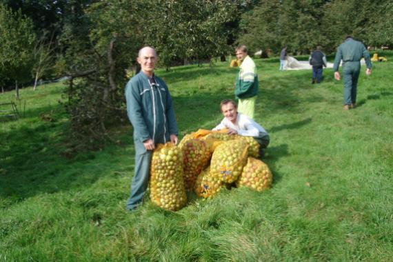 Ramassage des pommes avec Christian, Serge et David